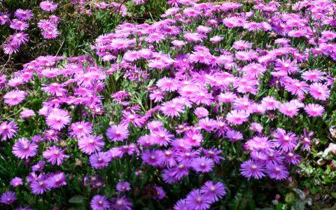 GITは豊富な草花も自慢です